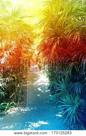 beautiful tropical forest with palm trees on island in Thailand