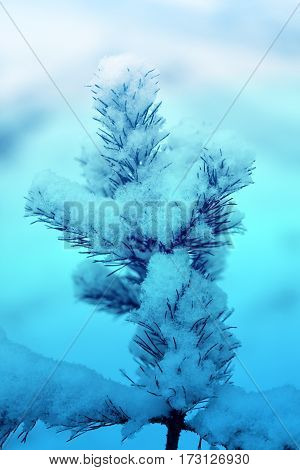 Beautiful top of the Christmas tree covered by white snow