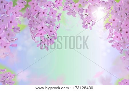 Spring background with pink and purple flowers of lilac flowers. Can be used for background, wallpaper, greeting card web banner.