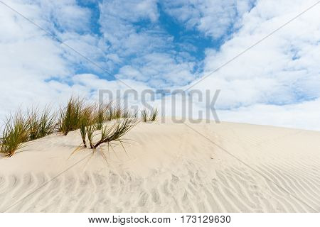 White clouds and blue sky above stunning Mangwhai Heads rising sand dunes with green and orange sedge