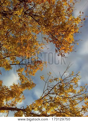 Photographed is a tree, branches and yellow leaves. A blue, cloudy sky can be seen from between them.