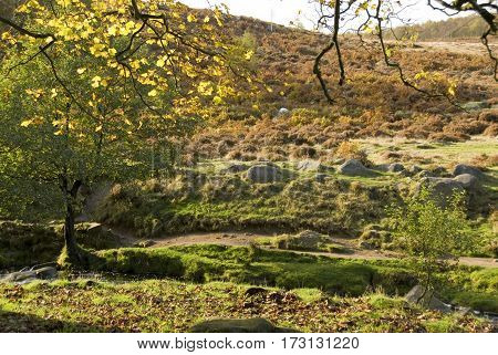 Autumn woodland with yellow and brown leaves on trees beside Burbage Brook, Padley Gorge, Longshaw Estate, Peak District, UK