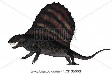 Dimetrodon dinosaur roaring isolated in white background - 3D render
