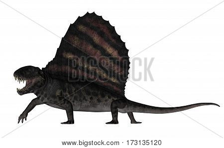 Dimetrodon dinosaur roaring while walking isolated in white background - 3D render