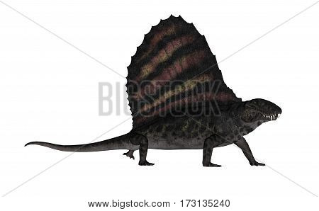 Dimetrodon dinosaur walking isolated in white background - 3D render