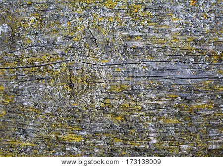old textured wood closeup with natural patterns retro style