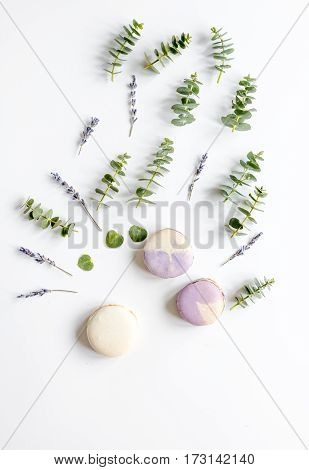 Spring pattern in pastel color with lavander macaroons and eucalyptus on white background top view