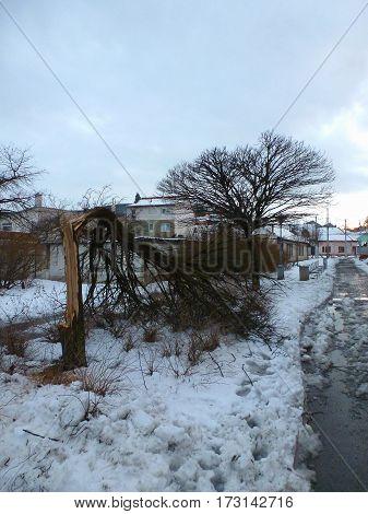 Photo of a broken tree next to a sidewalk
