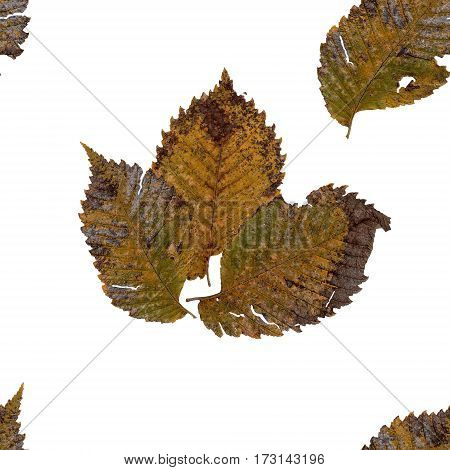 Background Seamless Texture Made Hawthorn Dry Pressed Isolated Rusty Sheet And Place For Text