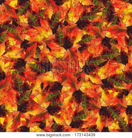 Seamless Background With Multicolored Maple Leaves