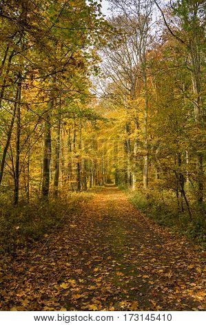 Autumn forest scenery with rays of warm light illumining the gold foliage and a footpath leading into the scene.