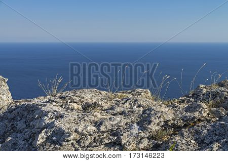 Blades of grass on a rocky cliff on the background of the sea on a sunny cloudless day. Crimea.