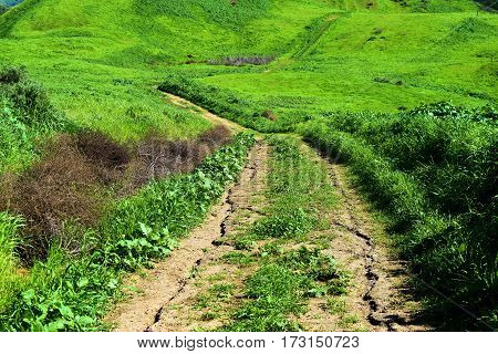 Hiking trail thru a lush green field during spring taken in the Whittier Hills, CA