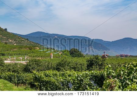 Wineries in the Wachau Valley during the day in the summer.