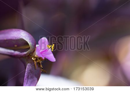 Beautiful purple flower closeup background with dreamy bokeh blur