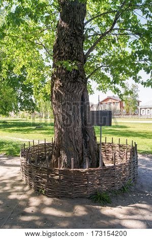 Konstantinovo, Russia - 14 May, Poplar planted Yesenin in 1924, 14 May, 2016. Museum of Sergey Yesenin Reserve.