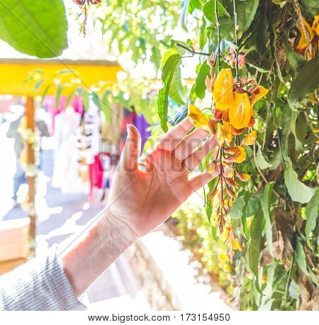 Woman's hand touching yellow flowers in a market in Guatemala.