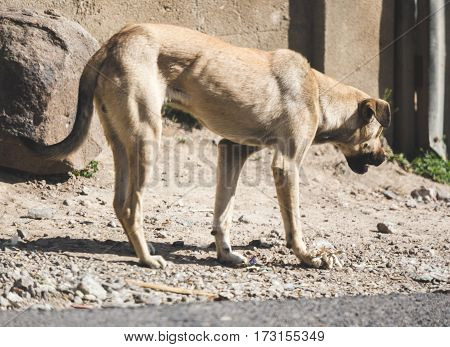 Stray Dog In Rural Guatemala