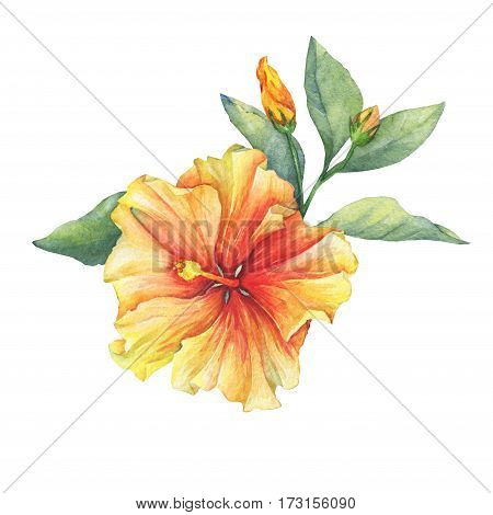 Yellow-red Hibiscus flower. Hand drawn watercolor painting on white background.