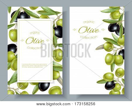 Vector vertical banners with ripe black and green olives on white background. Design for olive oil, natural cosmetics, health care products. With place for text