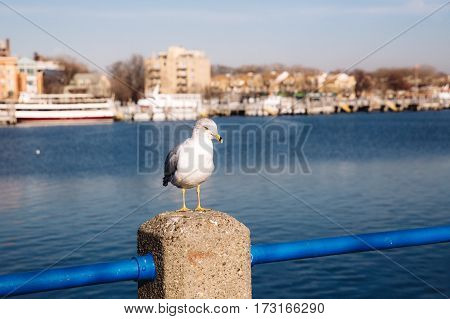single seagull in bay with ship and buildings on the background