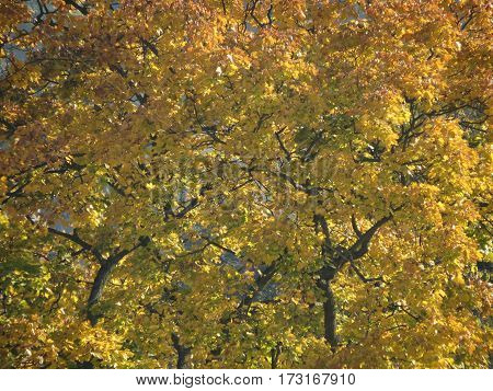 And the leaves that are green turn to brown - Autumn leaves on a tree