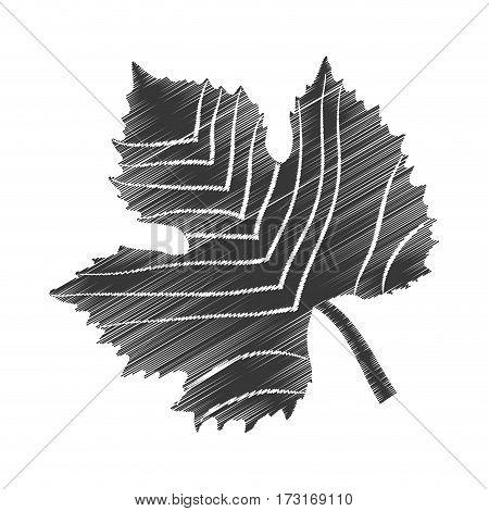 sketch leave grape design vector illustration eps 10