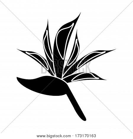 bird of paradise flower pictogram vector illustration eps 10
