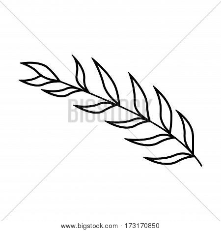 monochrome contour of oval leaves with ramifications vector illustration
