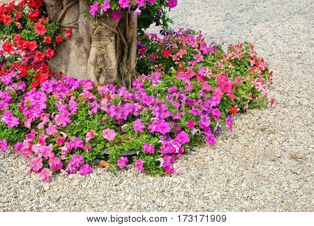 Lush landscaped garden with flower and colorful plant
