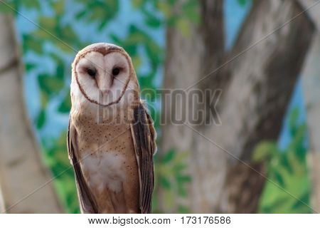 A barn owl looking right at you with those big engulfing eyes.