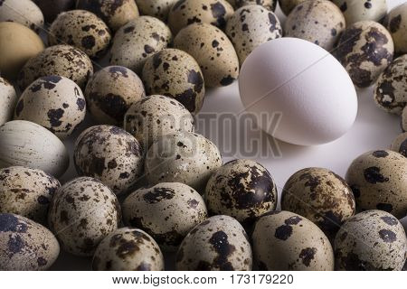 Alone Hen Egg in Center Space and Group of Multiple Speckle Quail Eggs Around it Leadership Concept