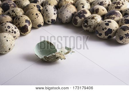 Cracked Egg Shell Entwine by Multiple Speckle Eggs.