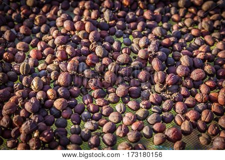 Closeup of raw coffee beans with sunlight in gunny bag