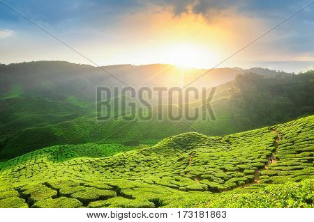 Viewpoint on the top of cameron highland tea valley and sunrise in Malaysia