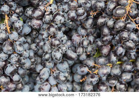 Black fresh grape fruit background natural background