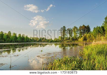 Summer Evening Landscape