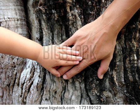 Small hand of a little girl on the big daddy's hand against a big tree background. Ecology concept