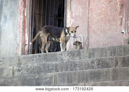 homeless dog mother and puppy with funny snouts on a city street India