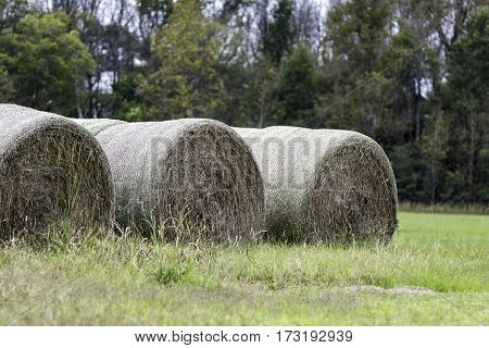 Three rows of wrapped round hay bales to the left in a field