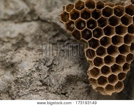 Macro empty wasp nest and selective focus wite copy space for text.