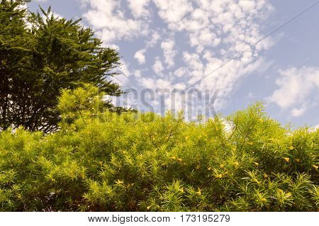 Shrub with yellow flowers and a green tree on a blue sun background