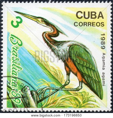 UKRAINE - CIRCA 2017: A stamp printed in Cuba shows a bird Heron Agamio agami the series Brasiliana '89 circa 1989