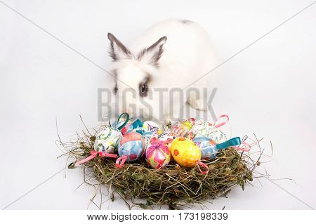 Cute Easter white bunny sitting with nest of colored eggs