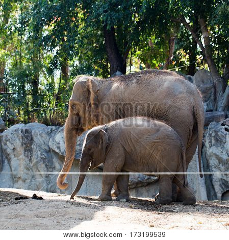 The little elephant with mother photo for you