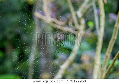 spider, Yellow-black, cobweb against green natural background