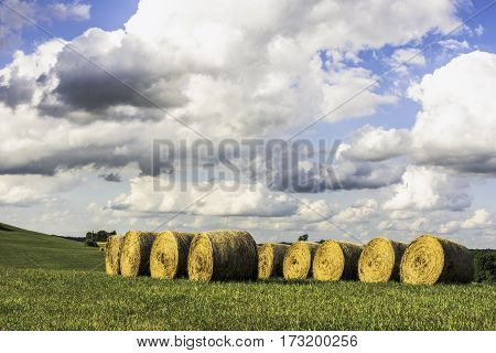 Round hay bales stored in a row in a field with large expanse of blue sky and cumulus clouds above