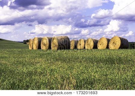 Round hay bales stored in a row in a field with blank area to the bottom