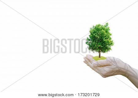 Double Exposure Ecology concept Human hands holding big plant tree with on blurred sunset background,World Environment Day,White background