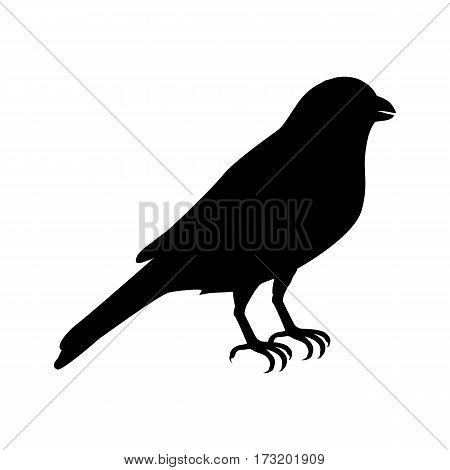 Canary vector. Domestic songbird concept in black color. Illustration for pet stores advertising, childrens books illustrating. Beautiful canary bird isolated on white.